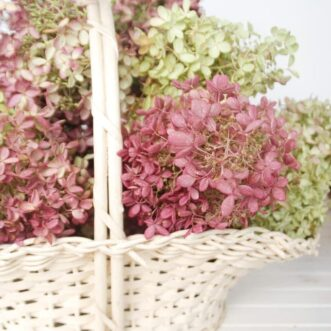Drying Hydrangeas | Ella's Room