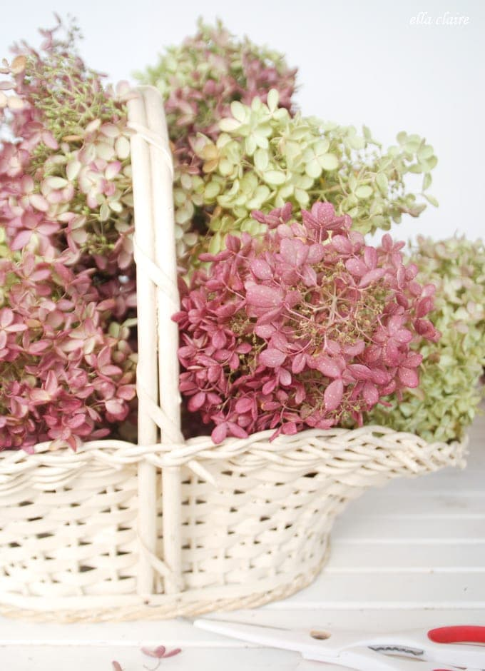 Drying Hydrangeas Vintage Accessories Little Girl's room