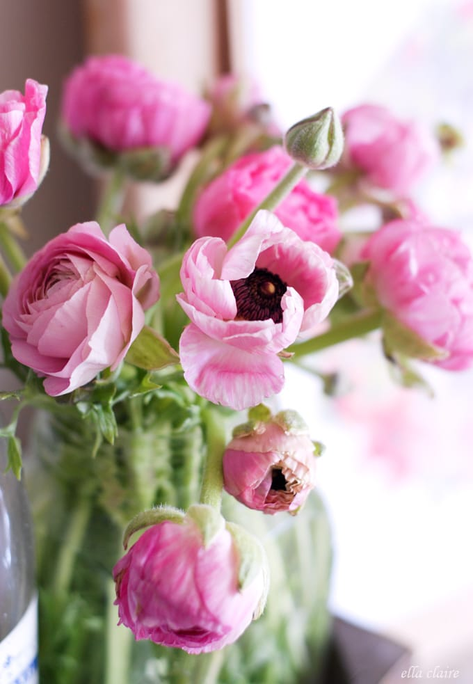beautiful Spring Ranunculus and a free printable