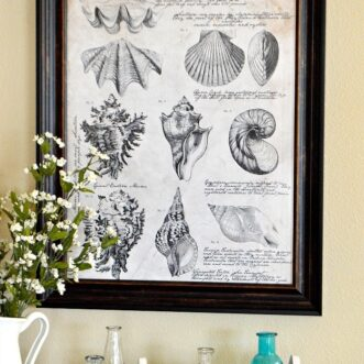 Free Printable Seashell Botanical Print