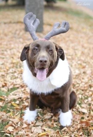 DIY Sven Costume for a Dog