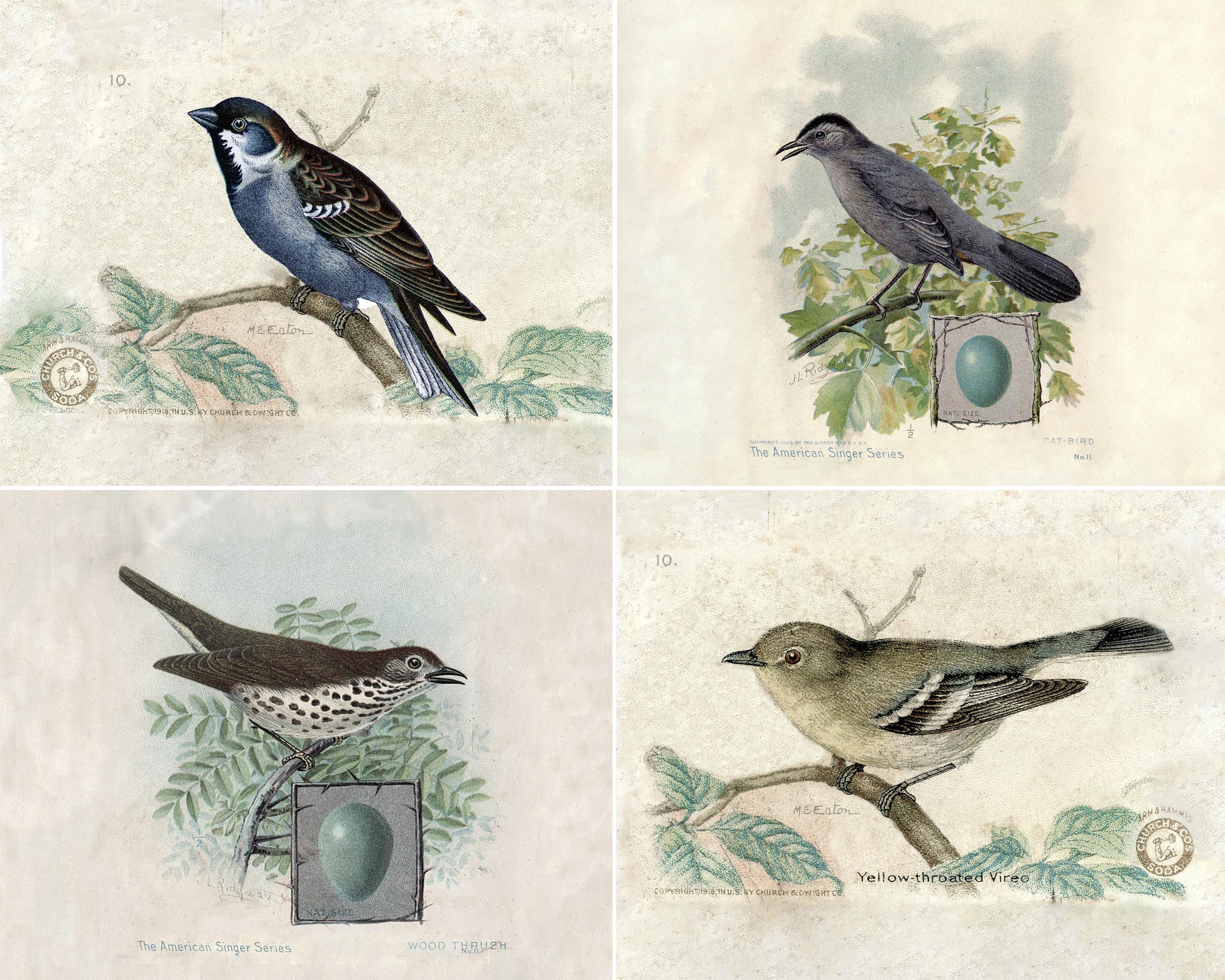 Old Fashioned image pertaining to printable bird pictures