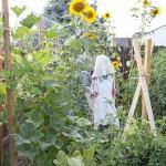 Garden Plans 2017