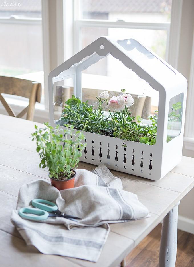 Vintage Swiss inspired Greenhouse Herb Garden