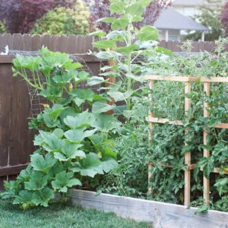 10 Tips for Gardening in Small Spaces