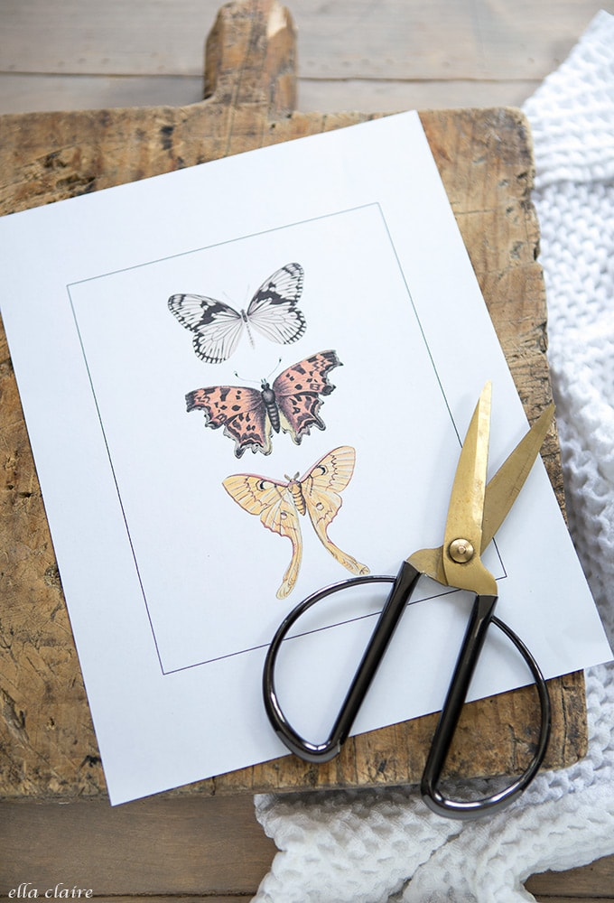 Free Printable Vintage butterfly art