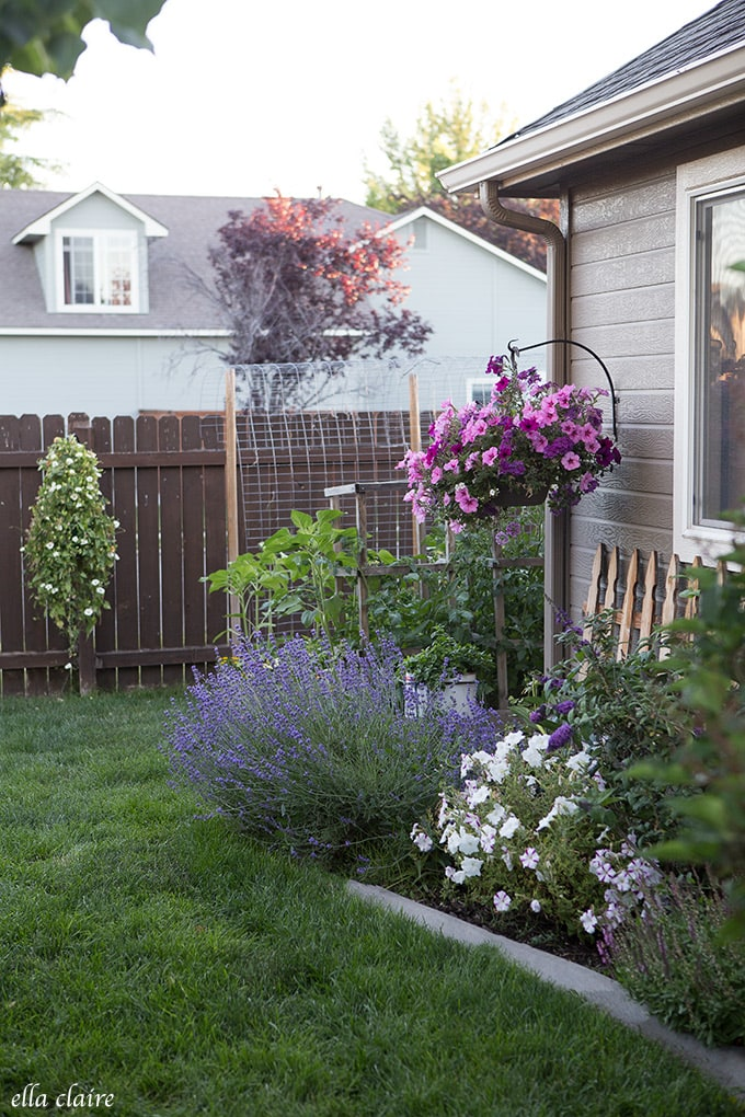 Annuals are a quick and easy way to add color to backyard planters.