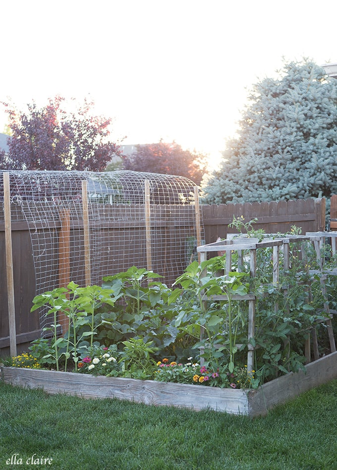 Plentiful Gardens can be grown in small spaces!