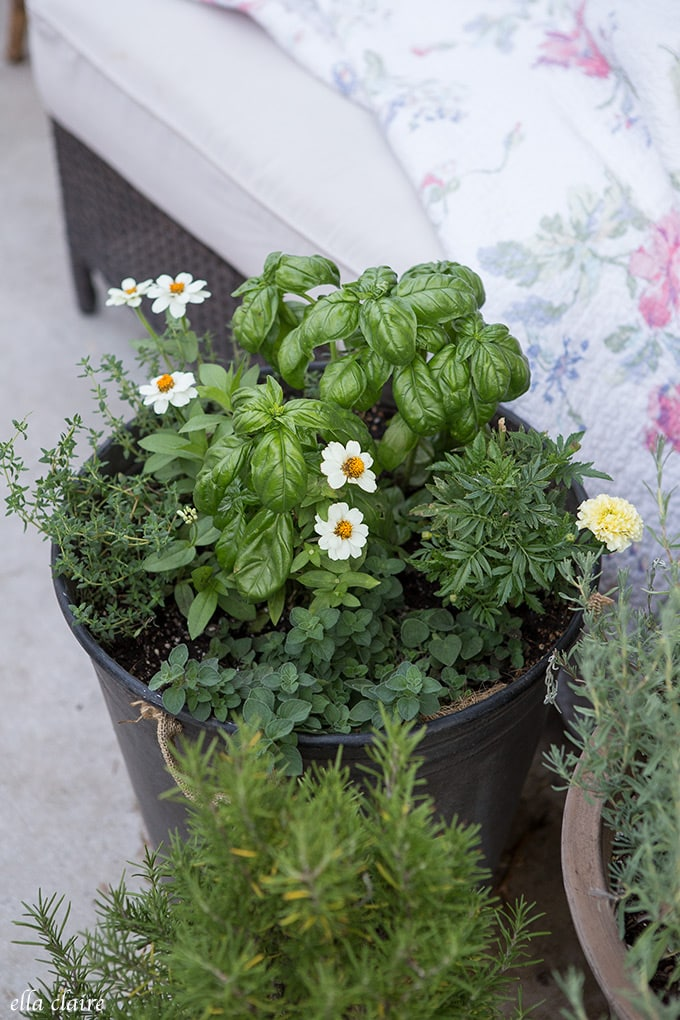 Herbs thrive in pots