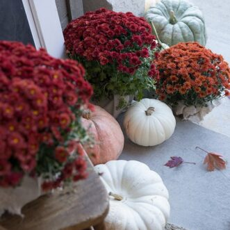 Rich red and orange mums paired with muted fairytale pumpkins make for a warm and inviting fall porch.