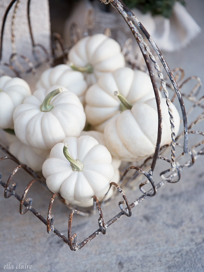 White pumpkins in rusty vintage basket