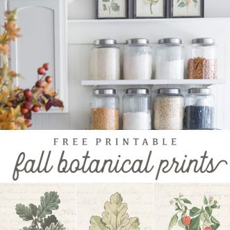 Free printable Fall botanical prints with french script and muted fall graphics- perfect cheap way to decorate your home for autumn