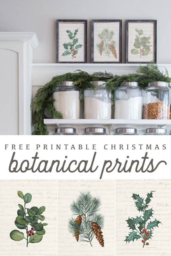 Free Printable vintage botanical prints with pretty french script background- a cheap way to change up holiday decor!
