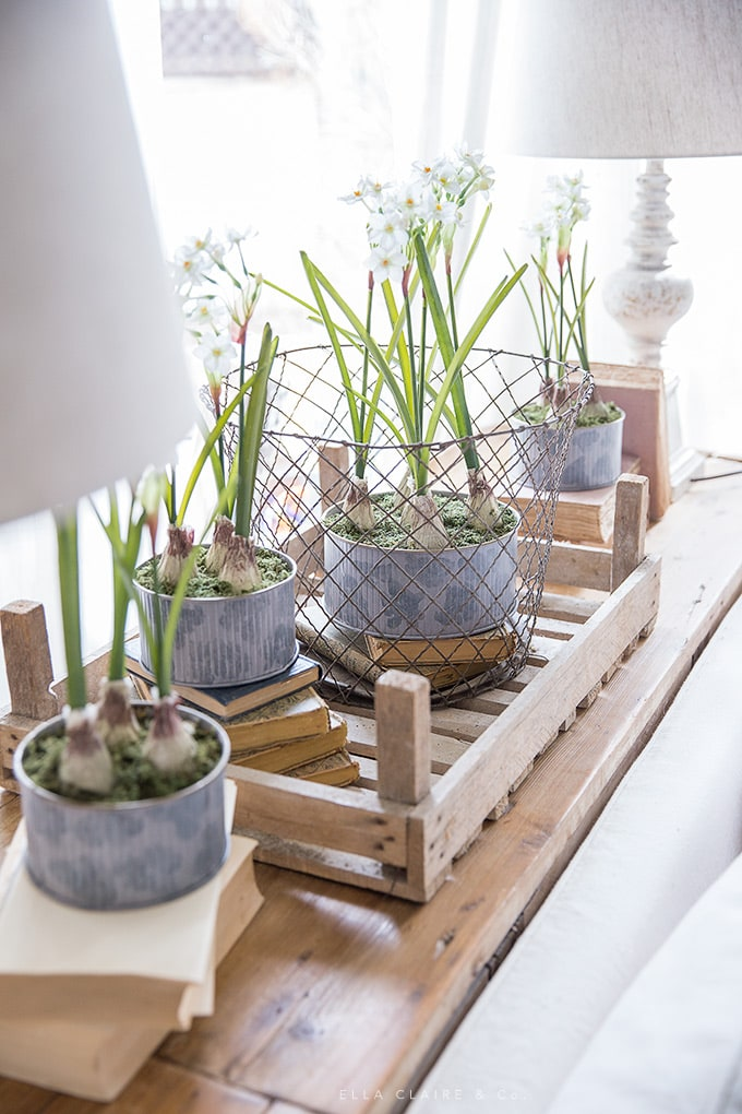 Spring bulbs and old books accent a side table for simple spring decorating