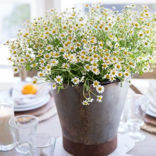 A vintage french bucket filled with chamomile is a charming centerpiece for a spring or summer inspired tablescape.