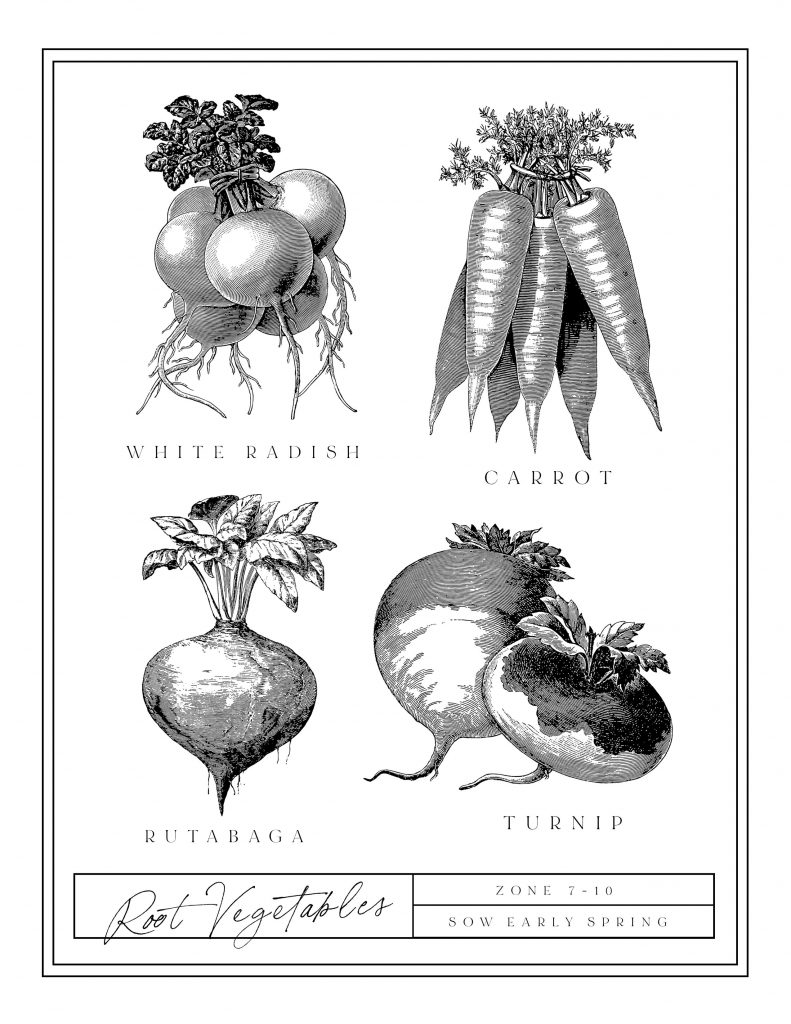 photo about Printable Vegetables known as Totally free Printable Traditional Greens Artwork - Ella Claire