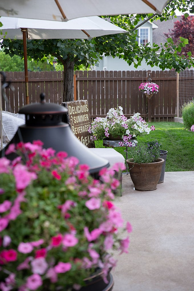 petunias add color and life to a backyard in the summer, are easy to hang from fences or on the patio, and are fairly easy to maintain.