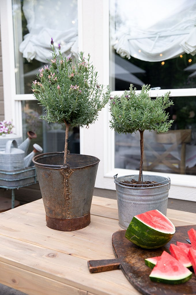 topiaries in vintage galvanized buckets add a French country feel to the patio and are easy to maintain in the summer.
