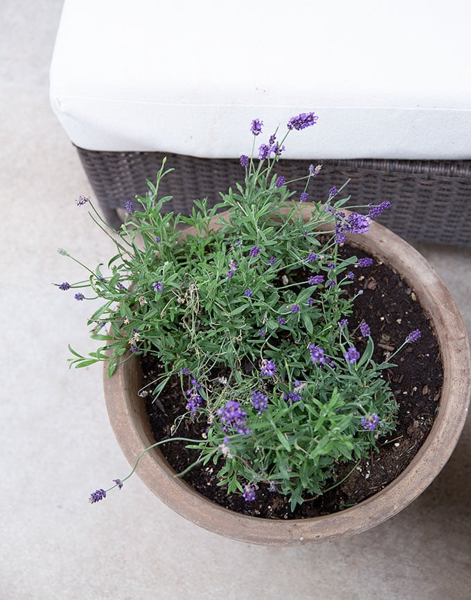 Potted lavender on the patio gives a French feel, smells and looks wonderful, and is easy to maintain.