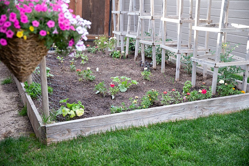 Every year we plant a garden in our small backyard with our tried and true favorite vegetable plants including tomatoes, cucumbers, carrots, onions, pumpkins, beans and more.