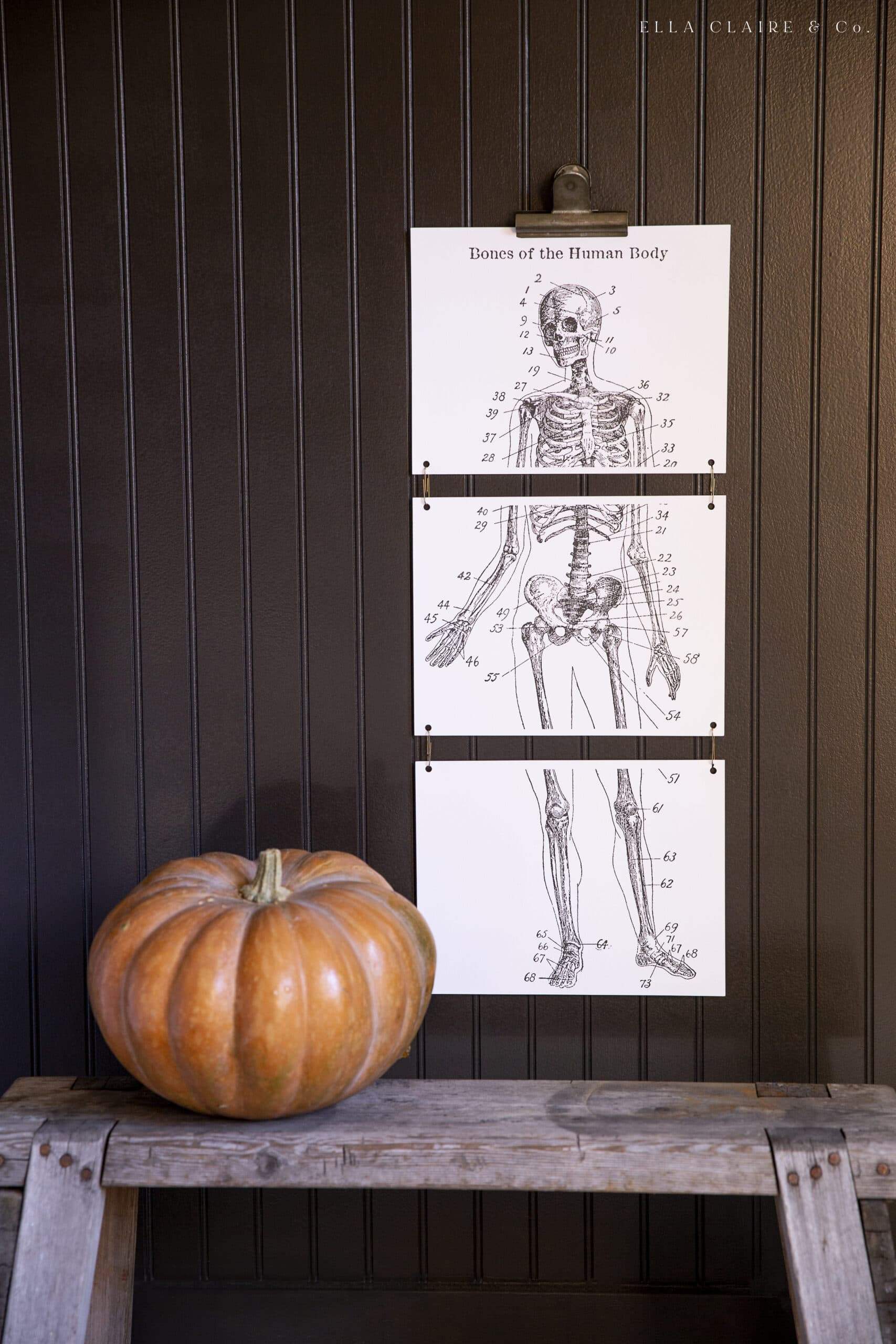 Large hanging skeleton printable